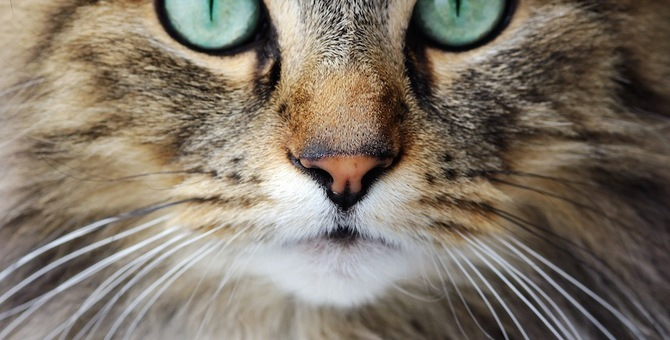 猫が口を閉じて鳴く3つの心理
