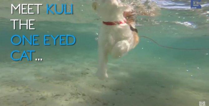 「海を泳ぐ、サーフィンもする!」ハンディーを抱えた猫が大好きな事