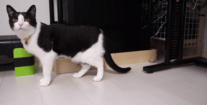 猫ちゃんお気に入りのおもちゃがナイ!これをDIYで解消する♪