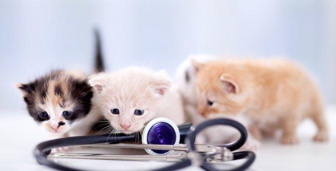 猫が『脱肛』の症状とは?治療法から予防法まで