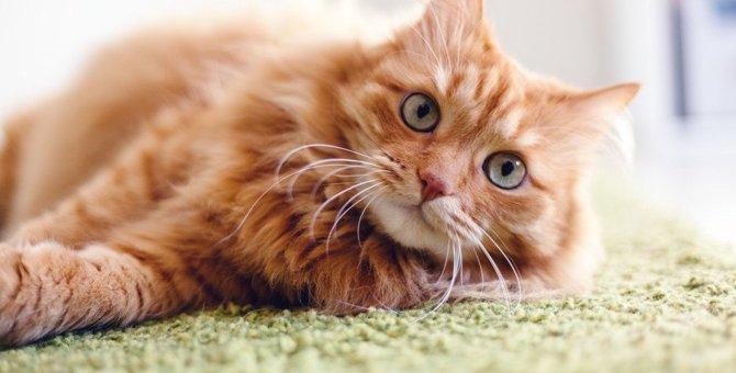 猫はペットショップで売れ残ったらどうなる?