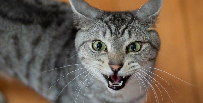 猫の『名付け』で絶対しちゃダメなこと4つ