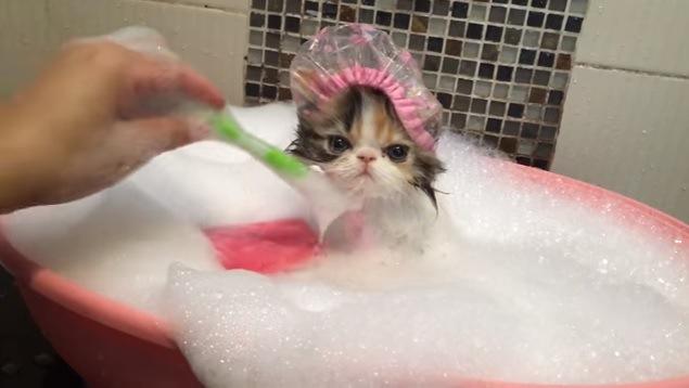 お姫様、お風呂の時間です♪可愛すぎる子猫の入浴☆