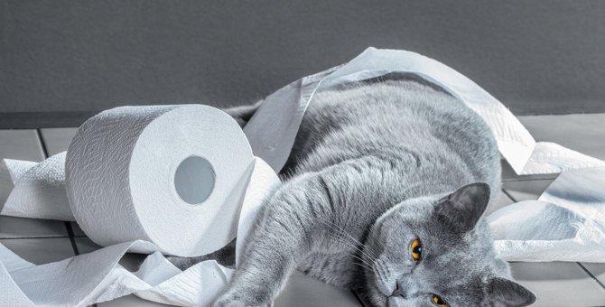 猫が『反省していないとき』にする態度5つ
