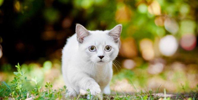 猫を脱走させないための予防法と逃げた場合の探し方のコツ