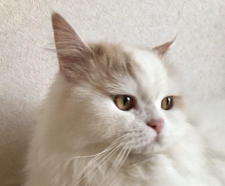猫に好かれる声はどんな声?主な特徴3つ
