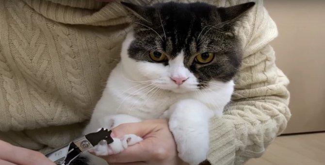 苦手な爪切りで極悪な顔になった猫さんたち!