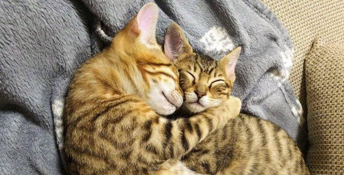 【大人気】尊いの極み…!抱き合って眠る保護兄妹猫さんの姿が眼福♡