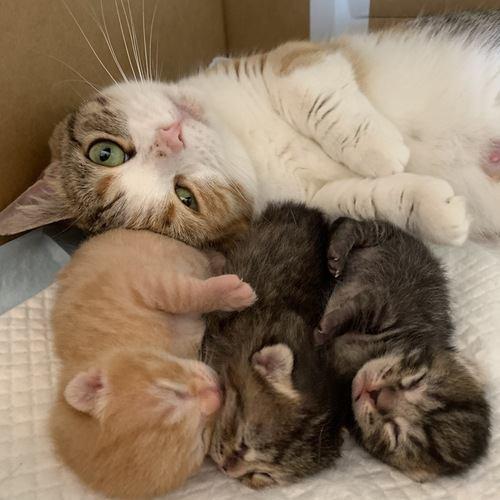 ママ猫は大変だ!子育てに奮闘するねこ達