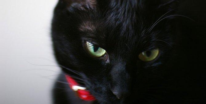 黒猫の性格!実は甘えん坊?好奇心旺盛な愛嬌ある子なんです♪