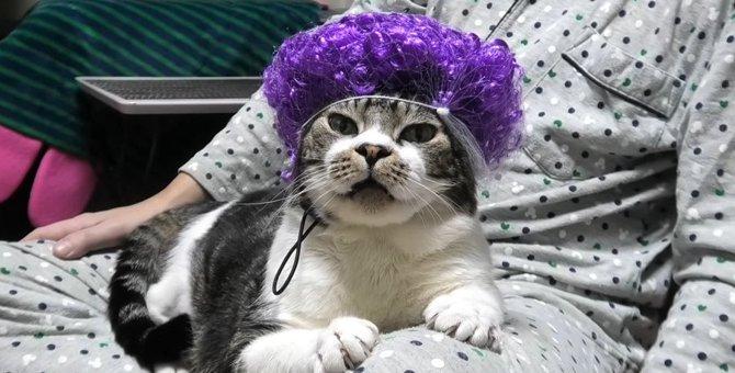 大阪のおばちゃんもびっくり?パーマが似合いすぎる猫さん