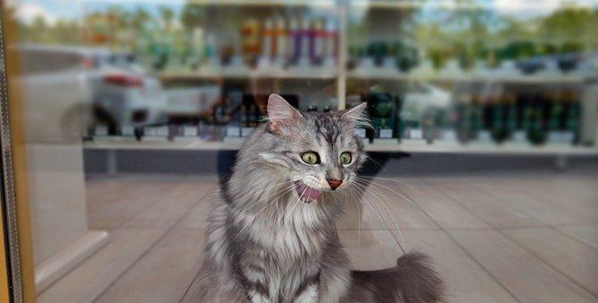コンビニに猫が集まる理由と注意点