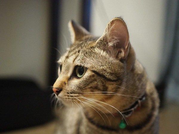 猫のお留守番タイムを充実させる方法5つ