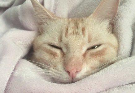 猫から『一緒に寝たい』と選ばれる飼い主の特徴5つ