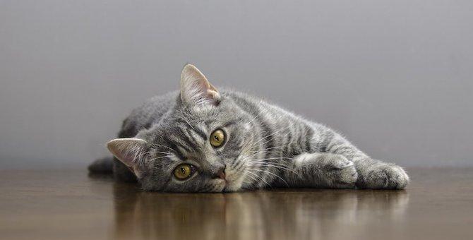 猫が高い音を聞いて気絶する!?FARSってどんな病気?