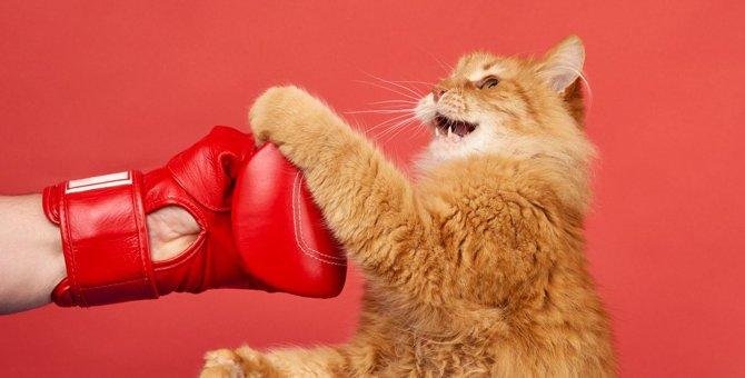 猫が飼い主を『叩いてくる』ときの理由3つ