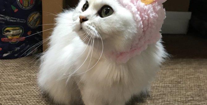 猫の異食症はなぜ起こる?原因と対処法について