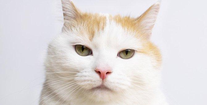 猫が『軽蔑』したときにする態度3つ