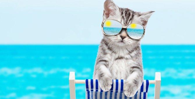 猫も日焼けに注意!絶対すべき『紫外線対策』3選