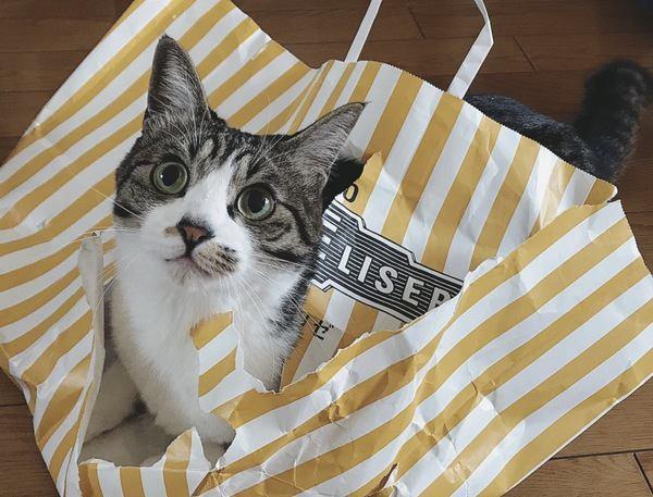 猫の『喜怒哀楽サイン』を読みとろう!