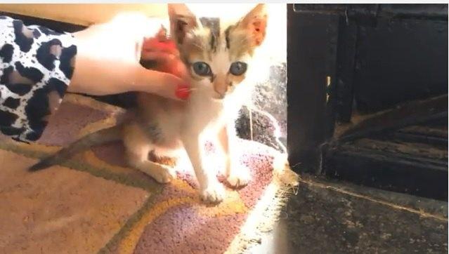 母猫とはぐれ、助けが必要な子猫には、愛とケアが必要…