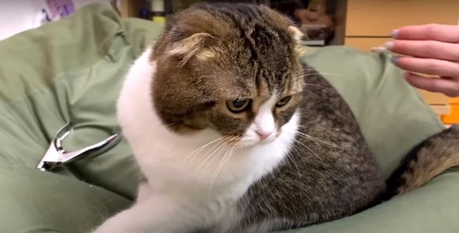 嫌いな爪切り…思わず表情に出てしまった猫さん!