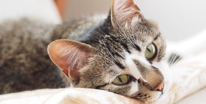 家猫が亡くなる前にする5つのこと