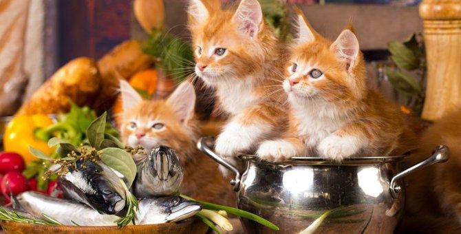 猫の死を招く危険も!絶対NGな『冬の食べ物』3選