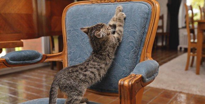猫の叱り方、正しい3つの方法とやってはいけない3つのこと