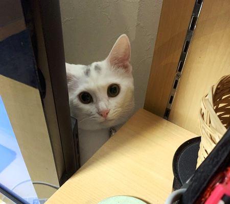 猫を絶対近づけたくない室内の危険ポイント5つ