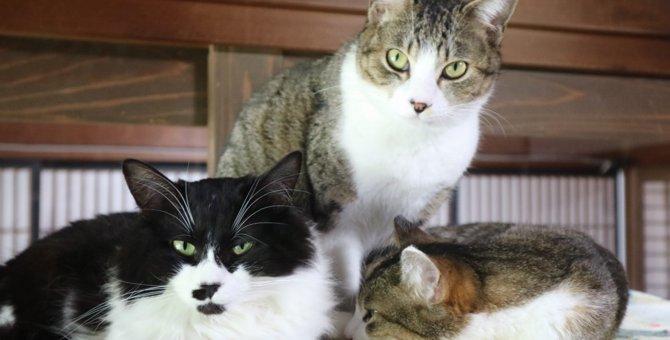 【福岡県 古河市】古民家でのんびり猫と触れ合える「古民家Cafe Gatto」