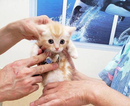 猫のために梅雨対策!猫の皮膚病「ホットスポット」の予防法と対処法