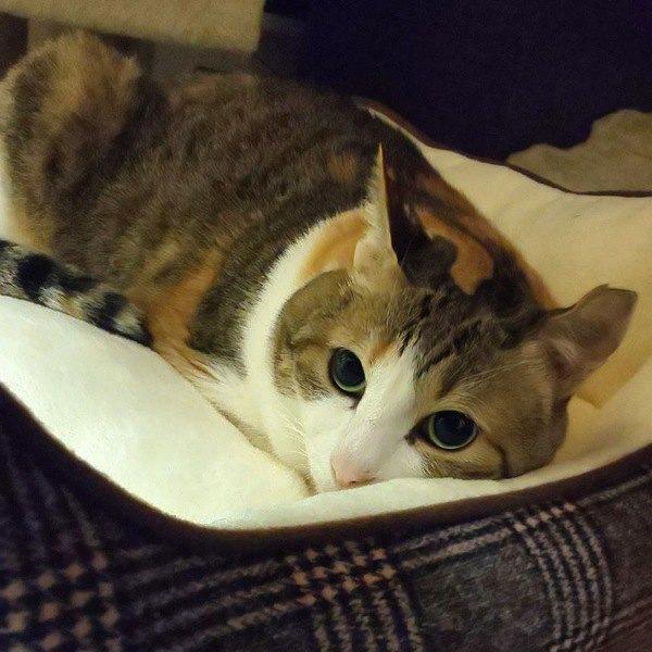 猫と一緒に住みたい!『ペット可』賃貸物件選びのポイント3つ