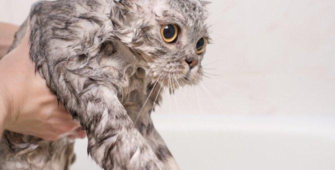 どうしてこうなったと思う猫のシリーズ7選