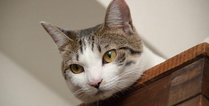 猫が飼い主を探してる時にする4つの行動や鳴き声