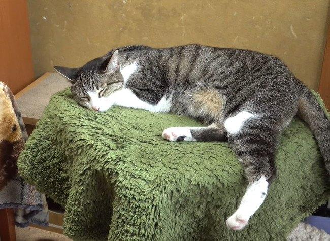 後ろ足を伸ばす猫ちゃんと前足を伸ばす猫ちゃん