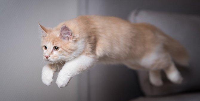 猫が突然暴れるのはなぜ?考えられる原因5つと対策