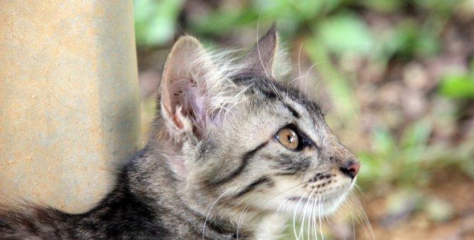 サバトラってどんな猫?その性格や人気の名前など