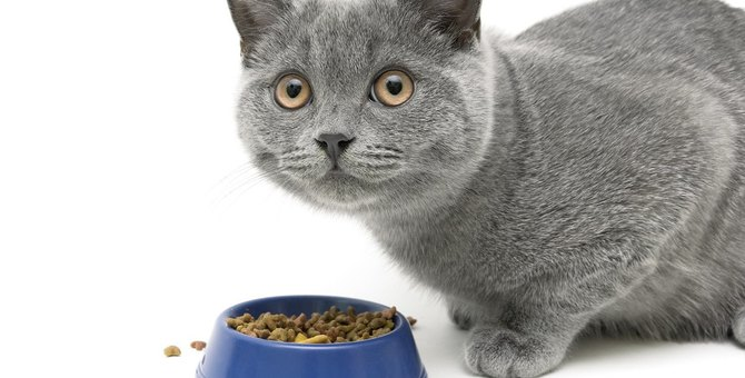 猫が『食べこぼし』をする5つの理由と改善策