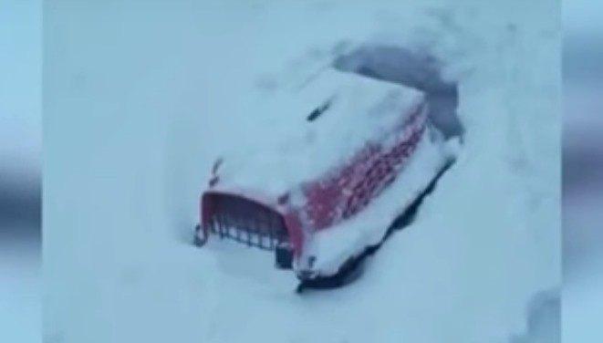 キャリーに入れたまま雪の中に捨てられた子猫。間一髪の発見と救助