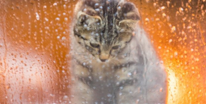 猫の気持ちを傷つける飼い主の暴言・態度5つ