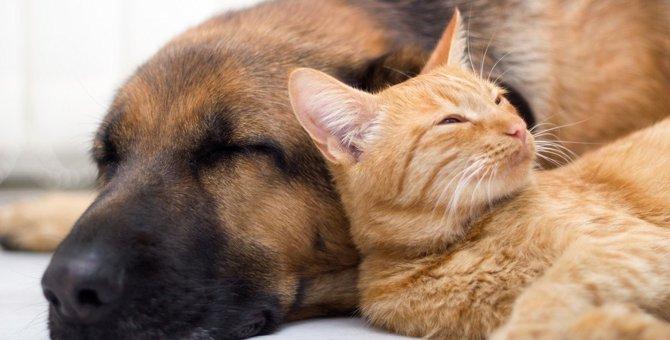猫も『フィラリア症』にかかる?感染経路や症状、予防法を徹底解説!