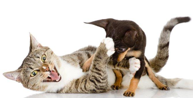猫vs犬はどっちが強い?喧嘩の強さを徹底検証