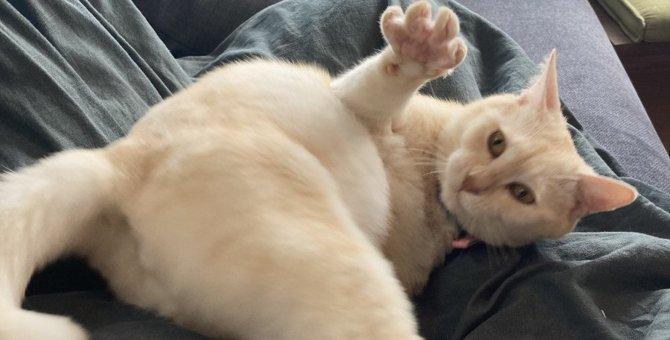 『かまってちゃん』な猫の特徴3つ