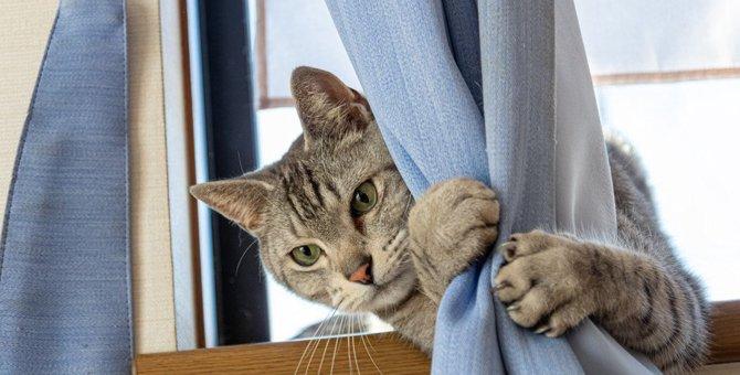 猫が『撫でて欲しくない』タイミング7選!飼い主が注意すべき状況やサインとは?
