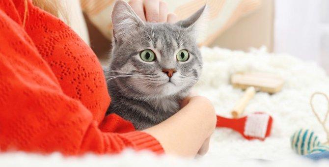 猫にもファーミネーターで抜け毛をゴッソリ取ろう!