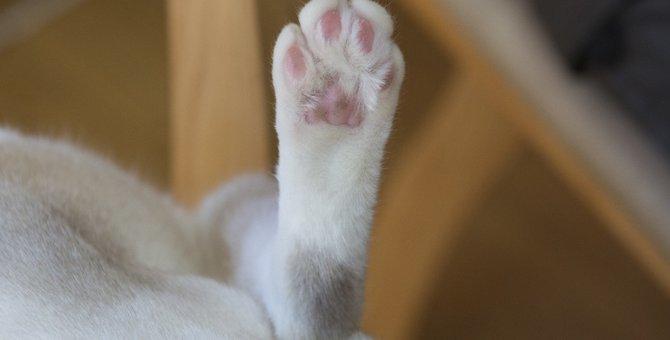 猫の後ろ足の爪は切る必要なし!その理由と注意点