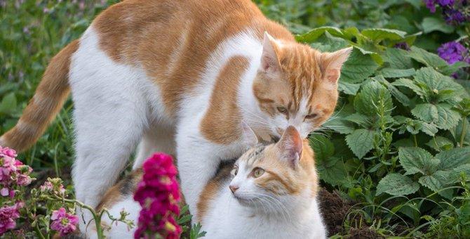 猫の『マウンティング行動』に隠された4つの意味と対策