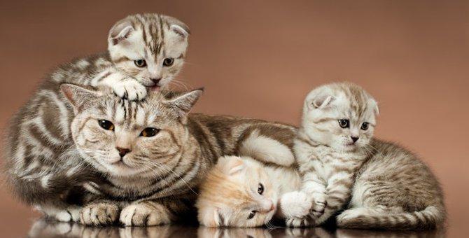 猫社会で生きていくために!母猫からの子猫への教育