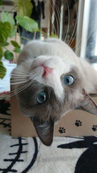 何故猫は寝床を変えるの?4つの理由を解説